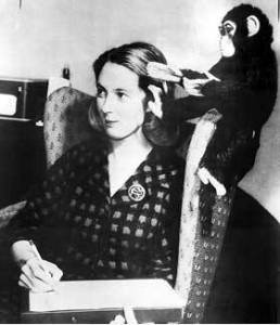 jane goodall with chimp brushing hair